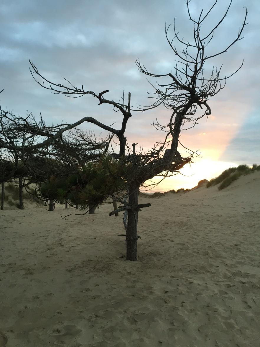 Bobby tree